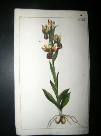 Wilhelm C1790's H/Col Botanical Print. Orchid 10-20